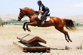 Horse Training, Eventing Grand Junction, Spirit Eventing