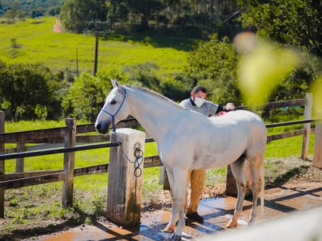 Saiba mais sobre o Enduro Equestre