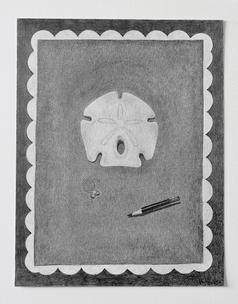 "Sand dollar, 2018, graphite on paper, 11""W x 14""H"