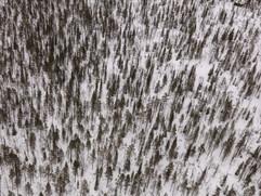 dh_2017_03_Finnish_Lapland_0542.jpg