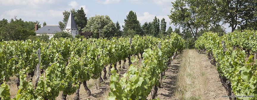 vignoble de Cheverny