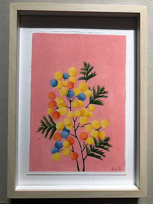 Mimosas de colores