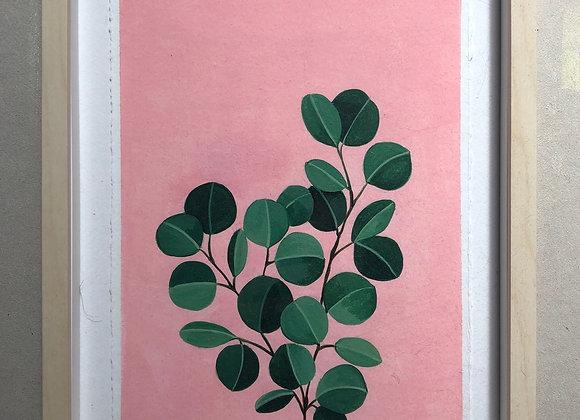 Eucalipto fondo rosa