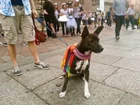 Gay Dog Pride, Bologna, 2013
