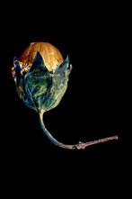uovo primordiale