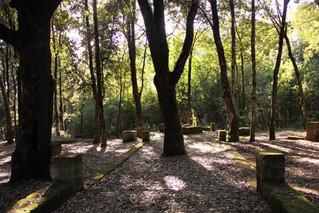 Meditazioni visive nel bosco della ragnaia