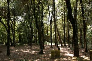Bosco della ragnaia 07.08.2011 - 009.jpg