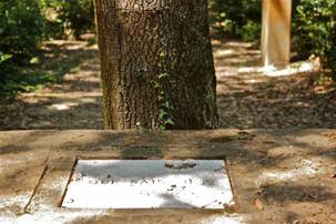 Bosco della ragnaia 07.08.2011 - 041.jpg