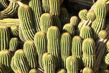Cactus, Monticchiello, 2013 - 1.jpg