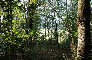Aequus Animus - Il bosco della ragnaia -
