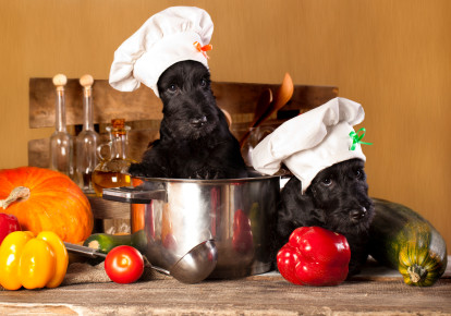 Hosting the Holidays with Fido