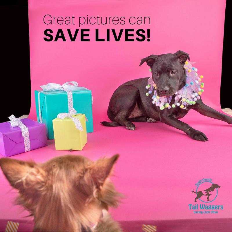 Pet Photoshoot - Riley's Birthday Fundraiser
