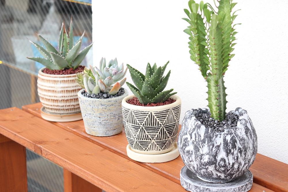 観葉植物  琉球ガラス やちむん 人気 かわいい おすすめ 沖縄 宮古島 通販 かっこいい