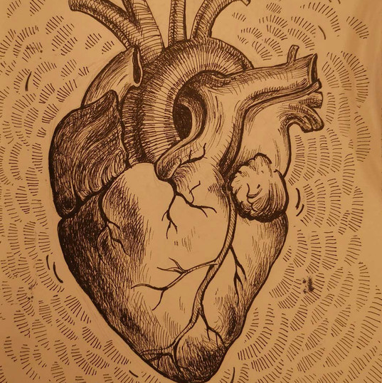 Projet Organes vitaux