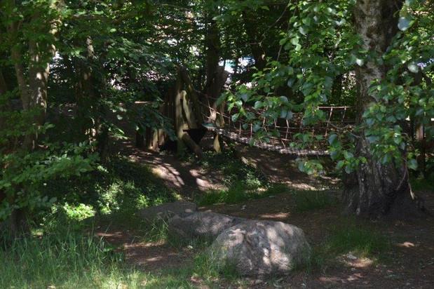 bosbrug natuurlijk buitenspelen buroBlad