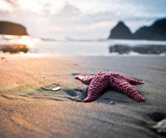 משל: כוכב הים
