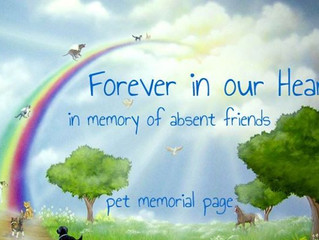 Pet Memorial Page & Donations