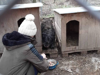 Bojana's Dog Shelter - Serbia