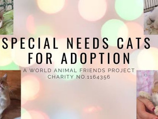 Special Needs Cats for Adoption