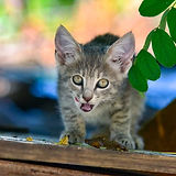 Angelcats.jpg