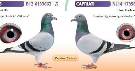 """""""Capriati"""" van Eddy Janssens, een top referentie om trots op te zijn!"""