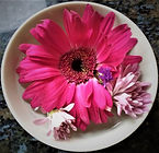floral SC.jpg