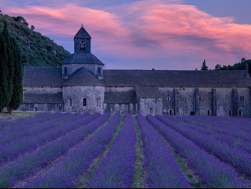 The Lavender Fields of Sénanque Abbey