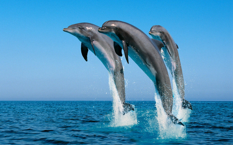 sea-water-whale-dolphin-spray-biology-70