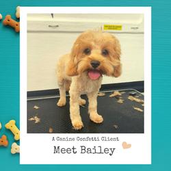 Little Bailey