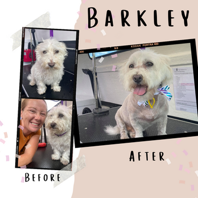 Barkley before&After.png