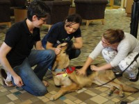Therapy Dogs Help Law Students De-Stress
