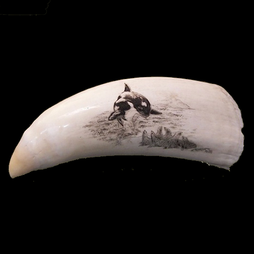Killer Whale's Tooth with Scrimshaw Dolphin