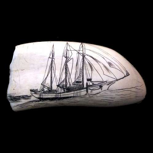 Sperm Whale's Tooth with Scrimshaw Ship