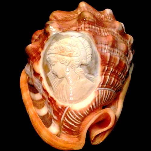 Etched Conch Shell