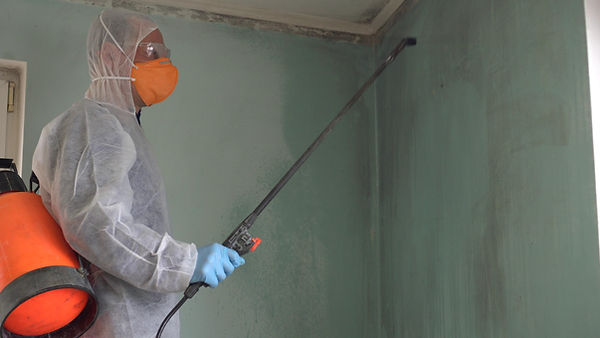 Mold remediation expert. Mold Inspection
