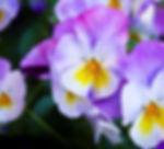 Spring_May_18_2019.jpg