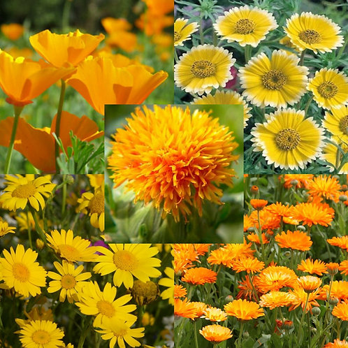 Sunshine Yellow Mix