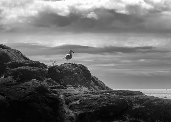 BIRD ON ROCK (1 of 1).jpg