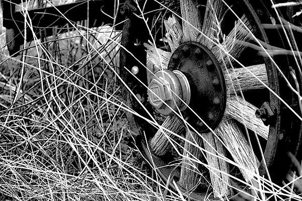 Wheel (1 of 1).jpg