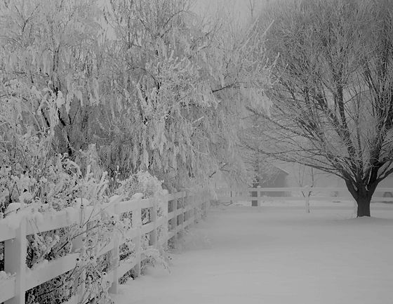 Winter fence_edited- LR1.jpg