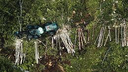 Varför brukas Sveriges skogar som de gör?