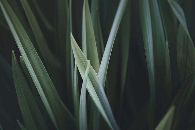 Close up of grass blades.