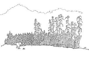 2020-05 Sam Galloway - Corona Garden.jpg