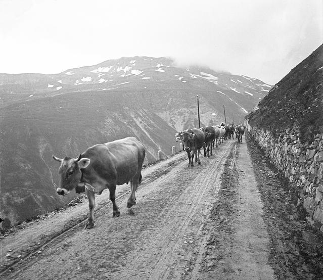 Rhone Glacier (A1676)