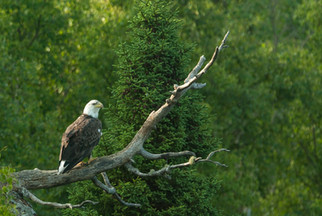 Eagle Boreal.jpg