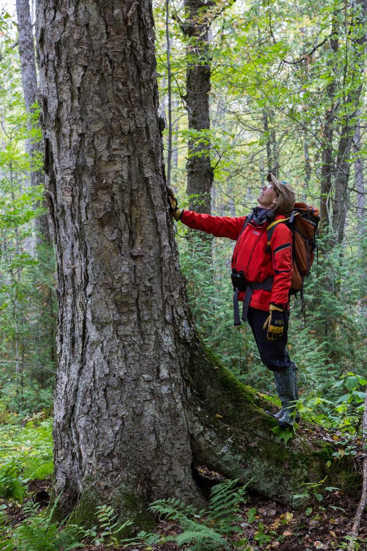 Joanie BI Tree.jpg
