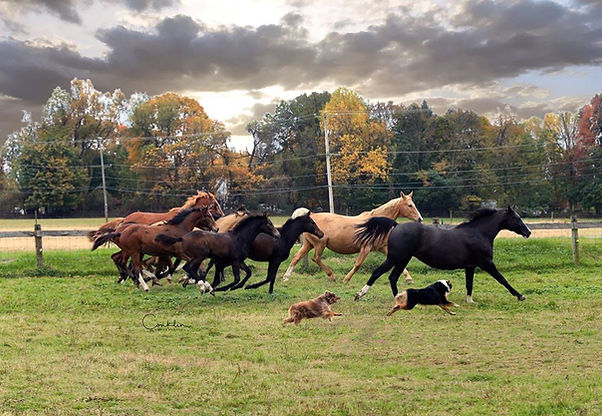 WHOLE HERD RUN BOB CONKLIN.jpg