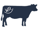wickens-ranch-cow-03.png