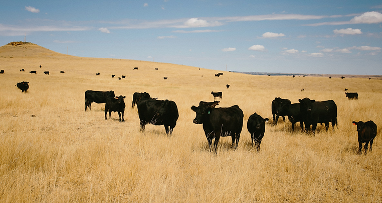 Wickens-ranch-montana-beef.png