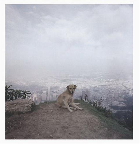 Dog Days Bogota - Alec Soth